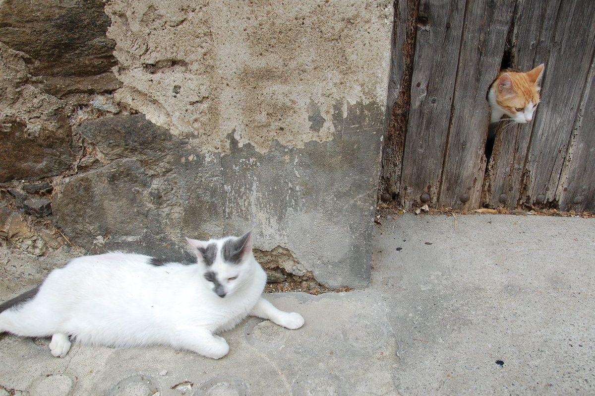 C'est mon Ichat à la chatière.