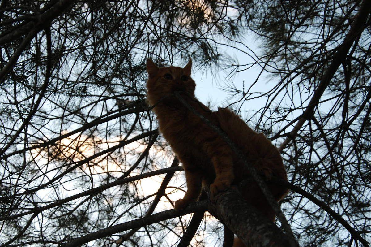 Une pause sur l'arbre.