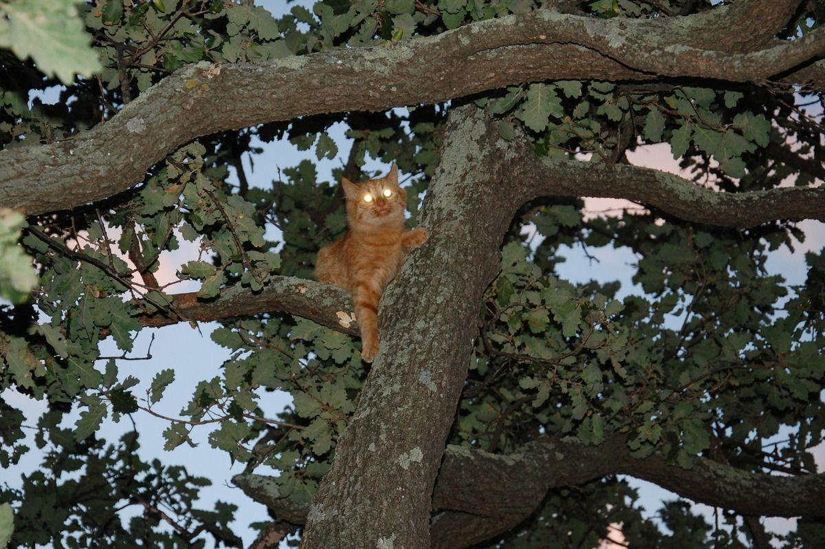 Un regard pour le chachou, je pense qu'en haut il a du se faire peur.