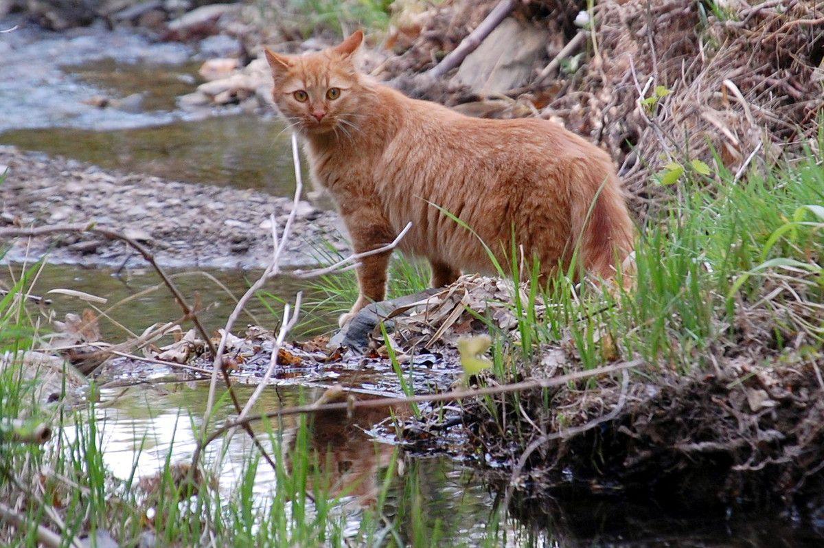 Le Chachou aime bien être à côté de l'eau.