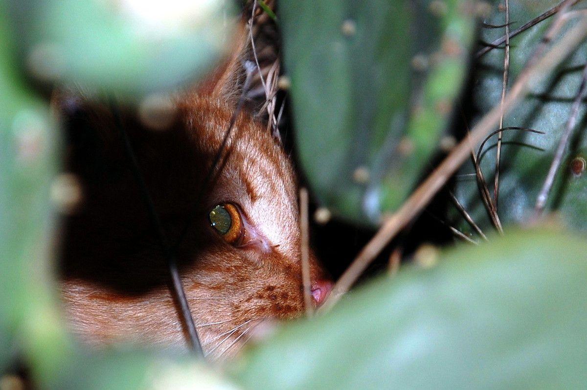 Le regard de Chachou ! Magnifique !