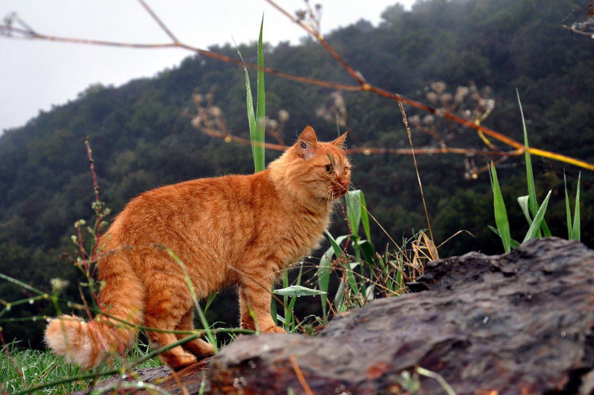 C'est bien beau un chat rouquin dans la nature