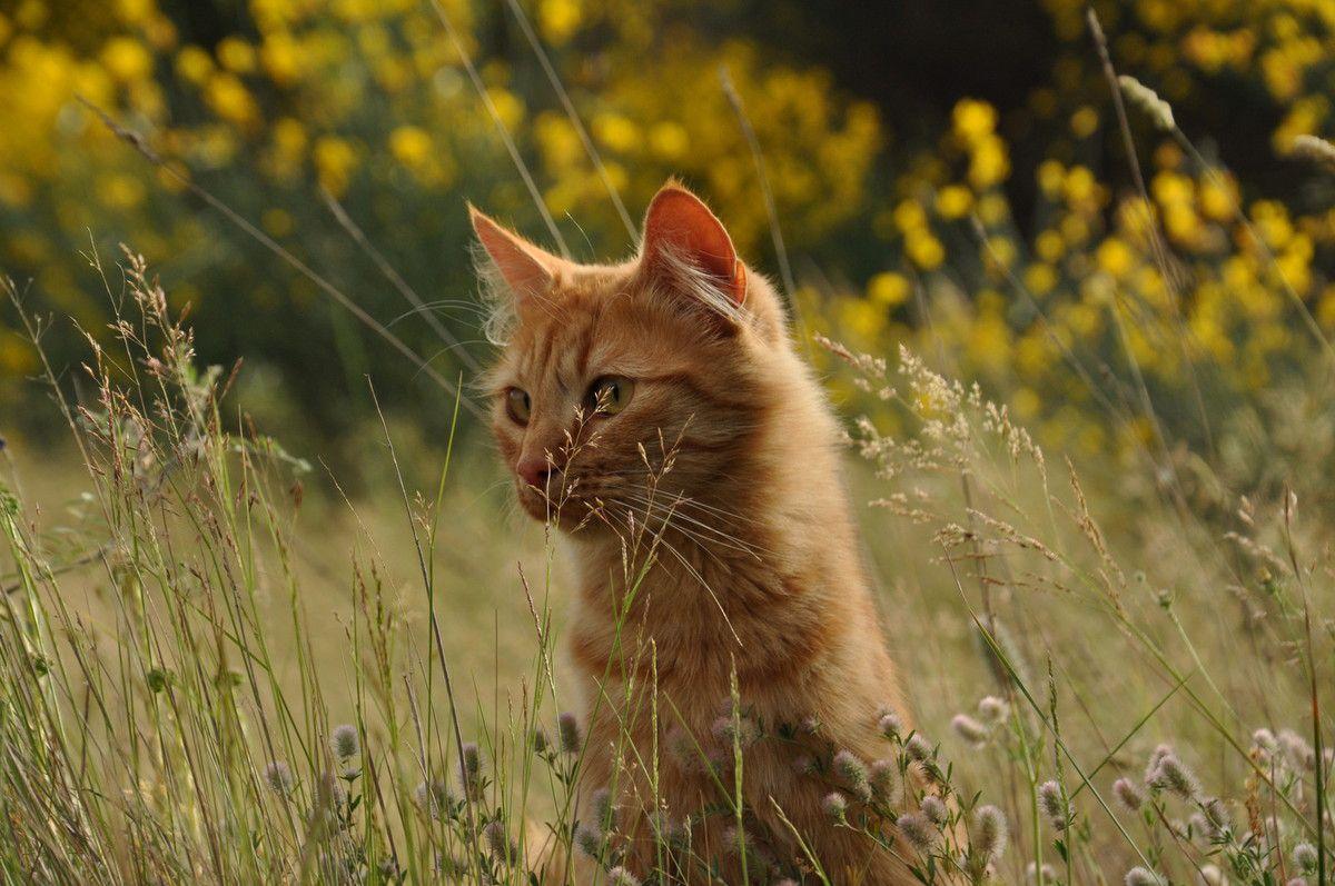 La balade des chats heureux ! Enfin surtout de Chachou !