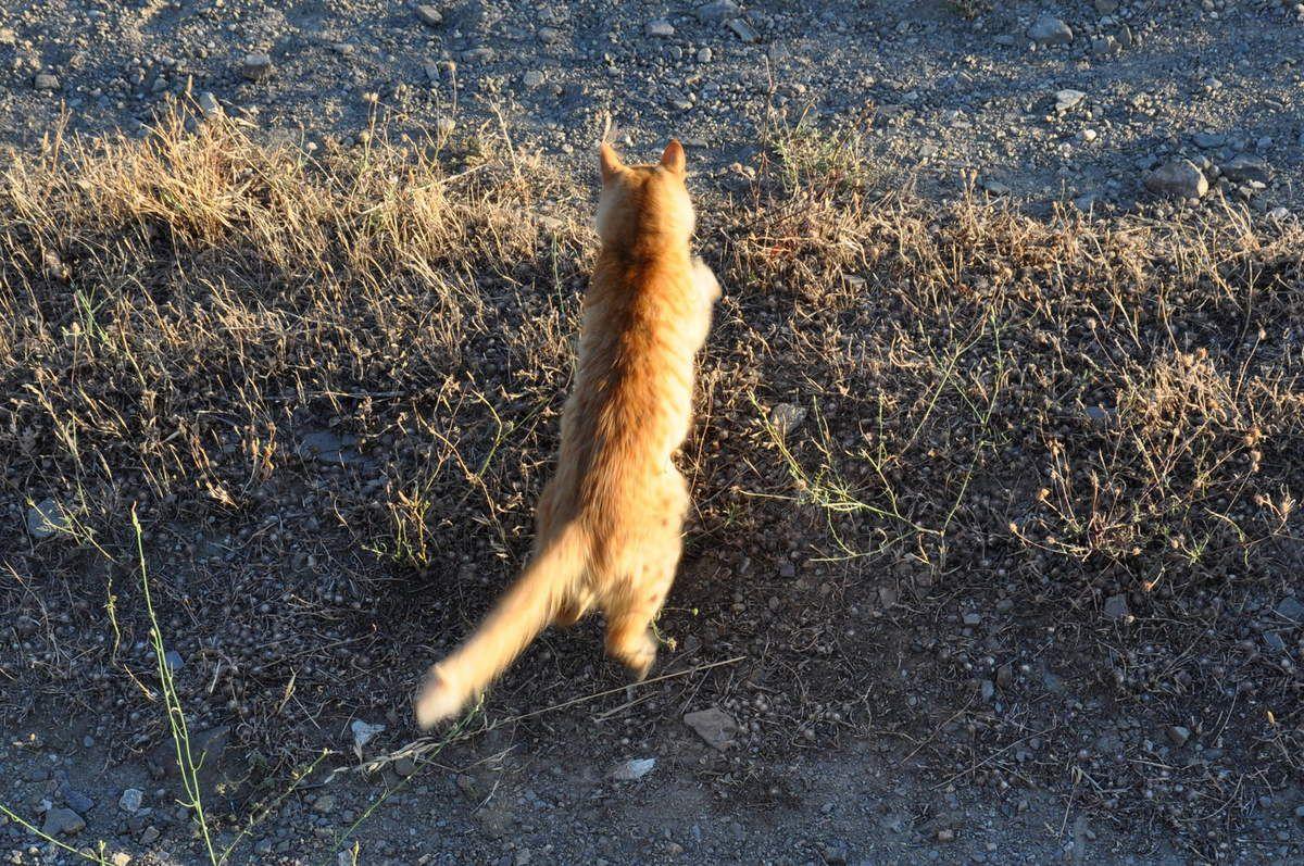 Pas content de Chachou, une chasse se mange !