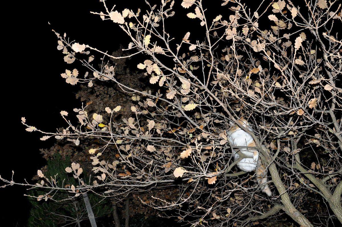 La vie est belle dans une balade dans la nuit.
