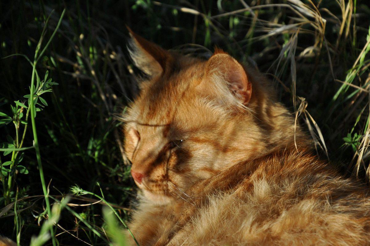 Oiseau envolé chat fatigué.