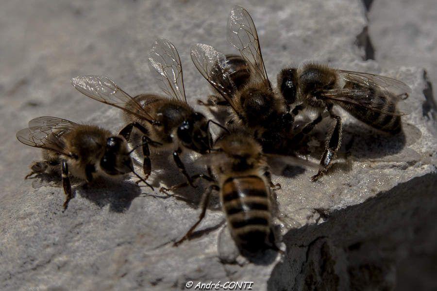 ''Si l'humain retrouve un peu la raison dans son rapport avec la nature, l'abeille aura alors la belle vie''