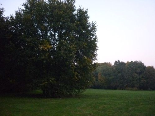 Balade à Pszczyna
