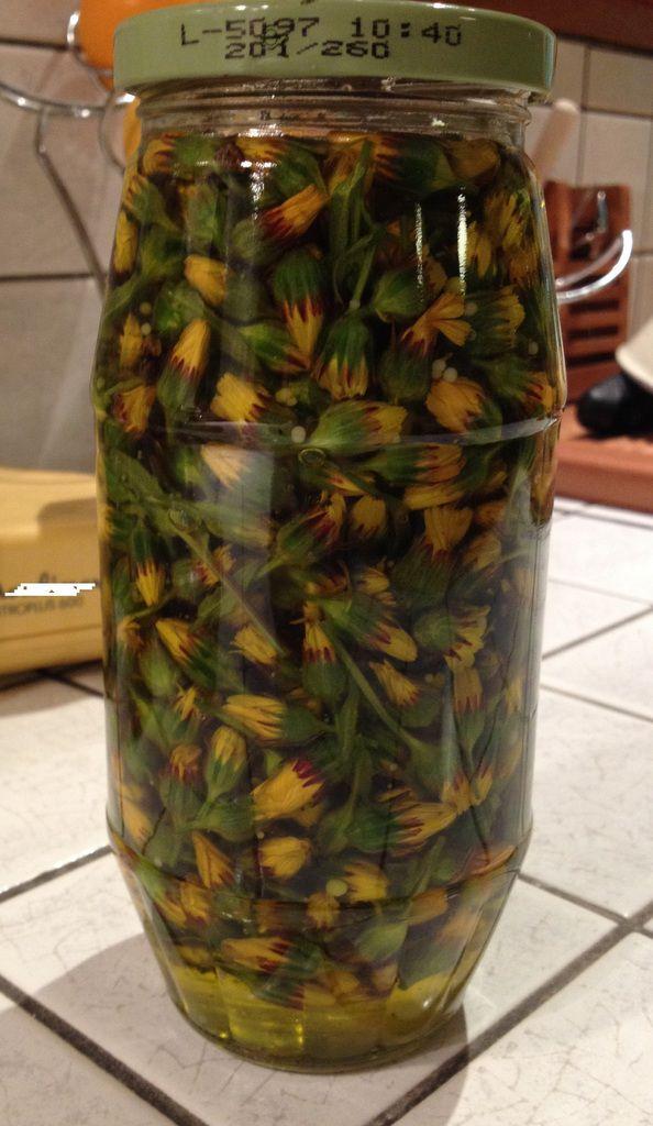 mâcérat de Calendula arvensis