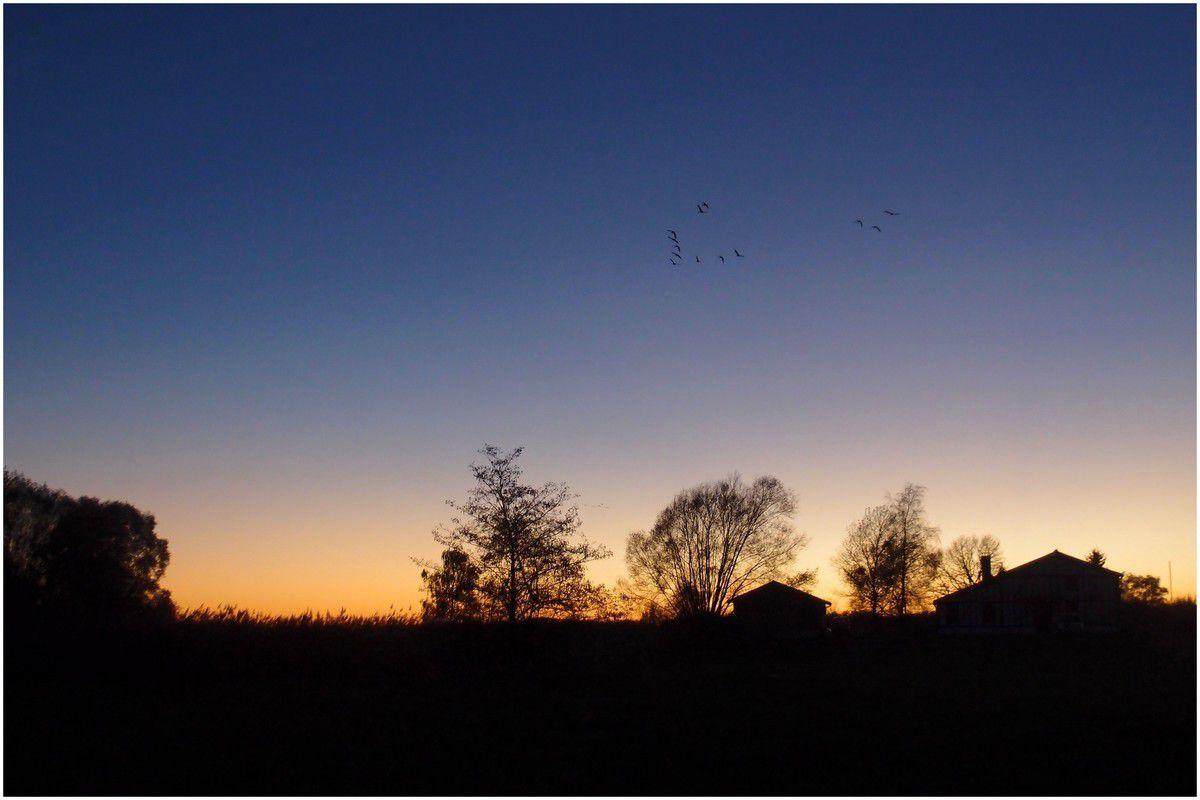 à droite, un petit vol de grues qui  rentre des champs et rejoint son dortoir pour la nuit