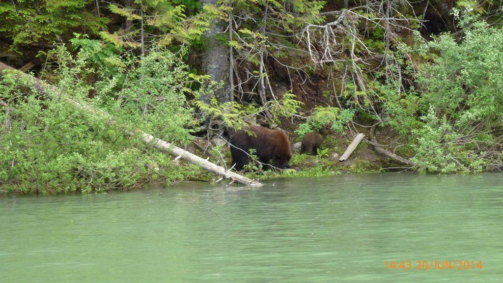 La vie sauvage dans les Montagnes rocheuses canadiennes