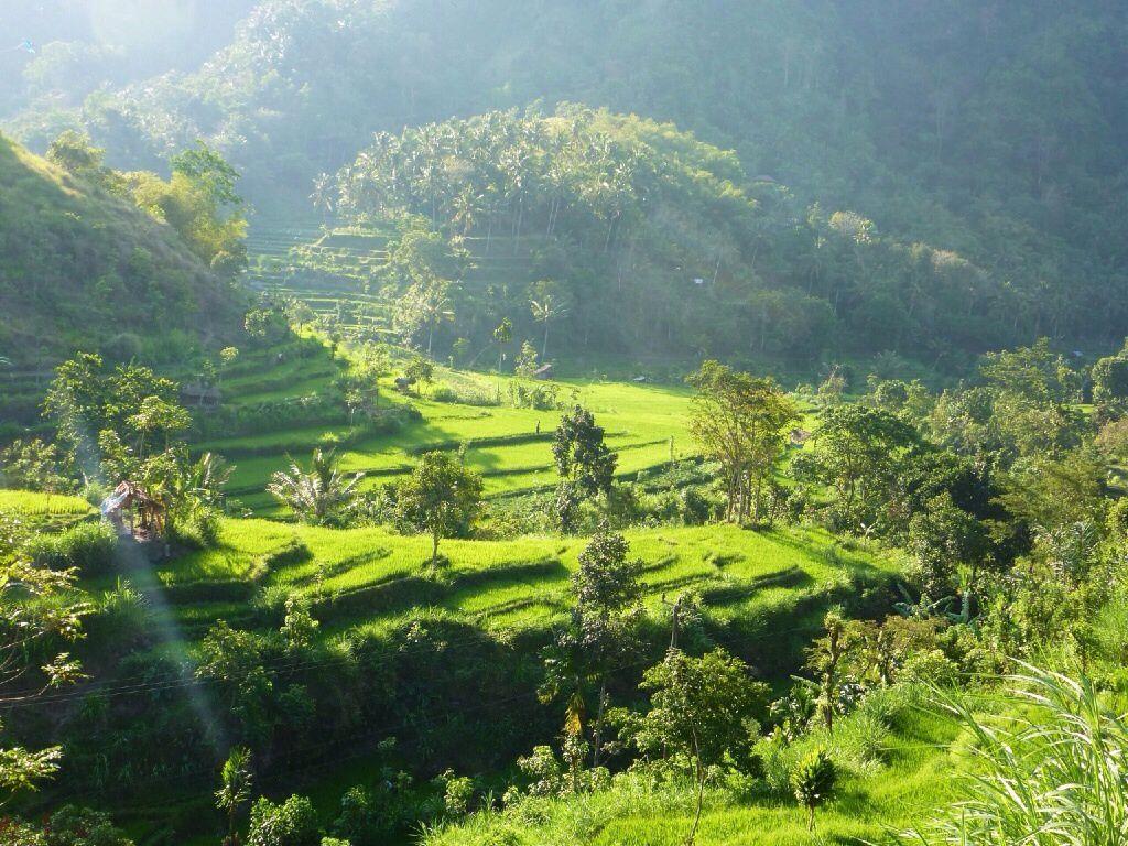 Située dans la partie Sud-Est de l'île, la région de Sidemen possède les plus belles rizières de Bali. On se balade en scooter et à pied ( très peu vu la température ambiante, au grand plaisir de Suzanne) dans des paysages magnifiques.