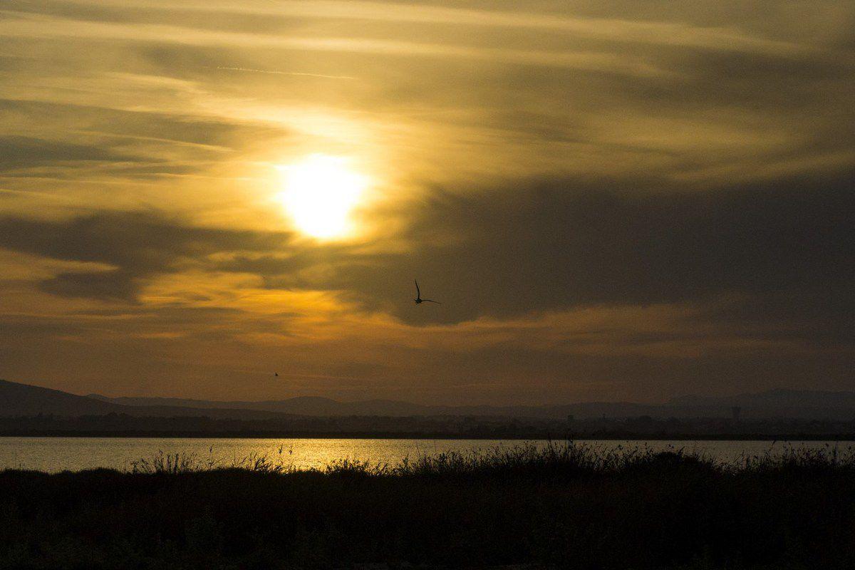 « La vérité c'est comme la lumière, aveugle. Le mensonge, au contraire, est un beau crépuscule qui met chaque objet en valeur. »  Albert Camus