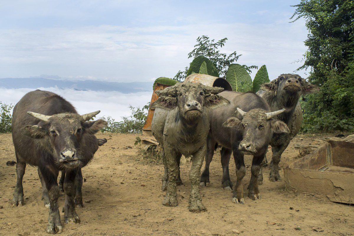 Au Laos le vert (la nature) et l'orange (les robes des moines) dominent. Le kitch est mêlé à la beauté. Dans ce pays où la lenteur règne la nourriture est un délice, servie étonnement vite. Le plus paisible des pays asiatiques, le moins peuplé, peut être le moins connu…