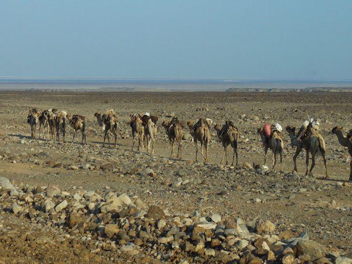 les caravanes de sel du Danakil