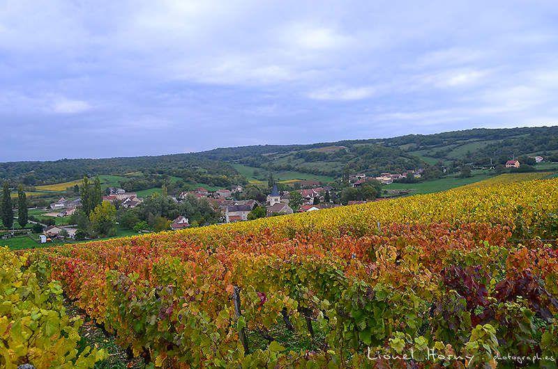 Dans les Vignes