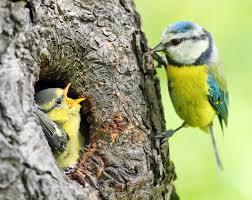 Les oiseaux de mon jardin !!! janvier 2016