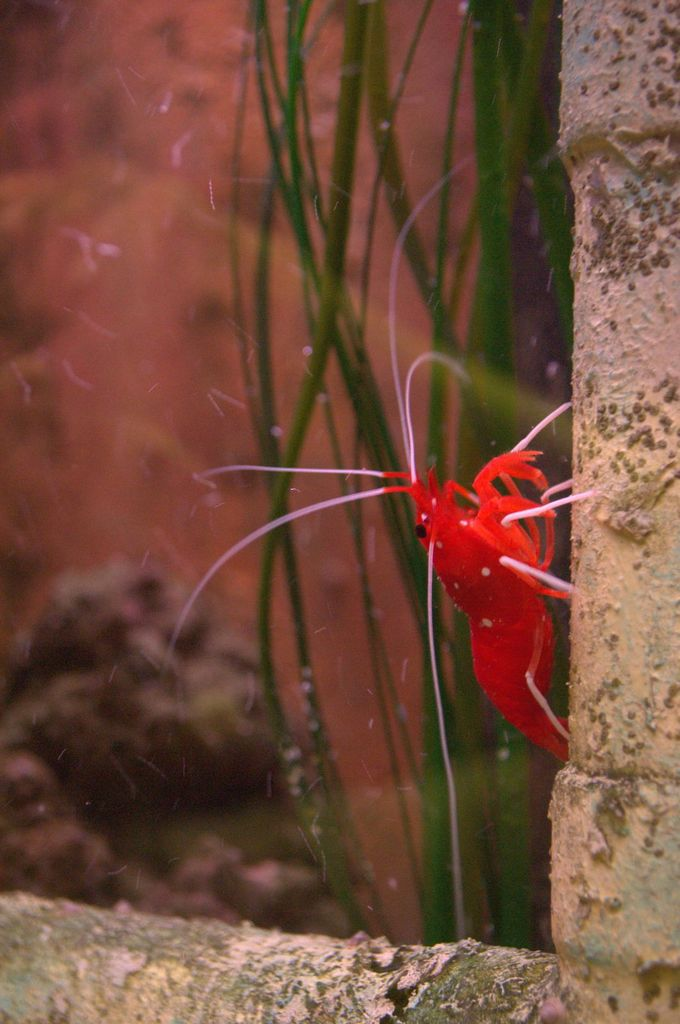 Visite au Grand aquarium de Touraine