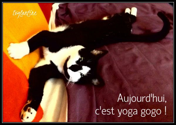 Semaine chats
