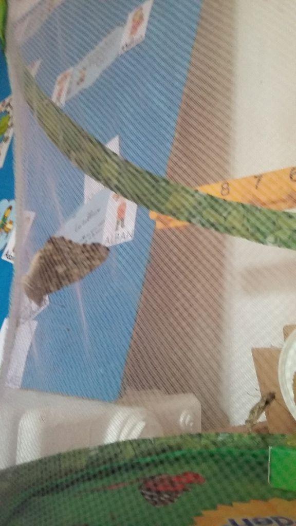 Les papillons en classe