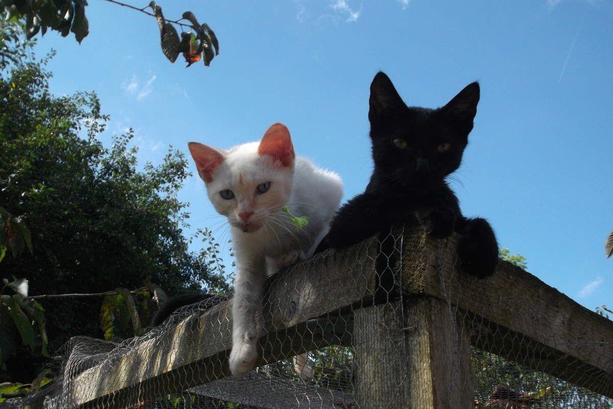 Un petit coucou de deux chatons sauvés de l'euthanasie