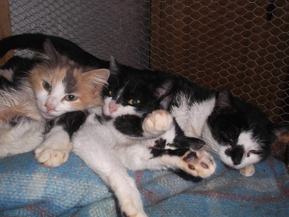 Des chats de l'Ecole du Chat Libre de Toulouse et une minette abandonnée