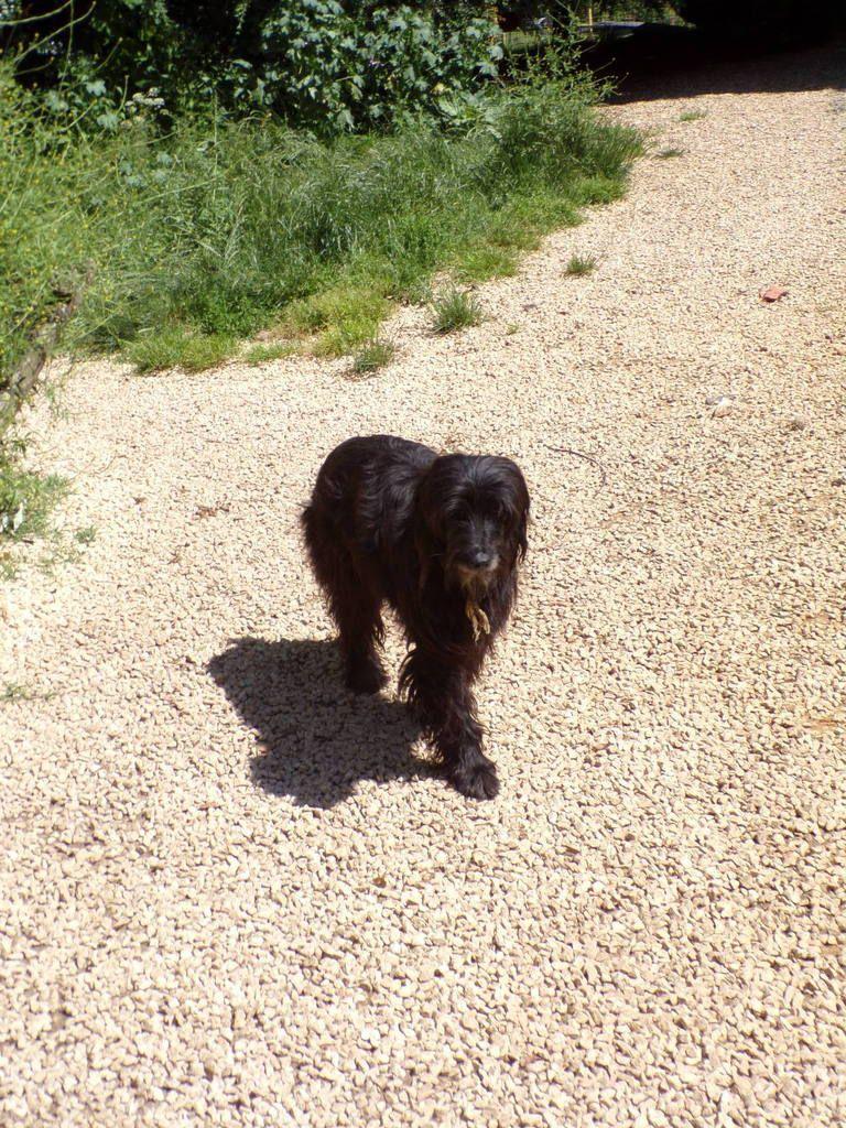 Sky, une belle chienne à l'adoption