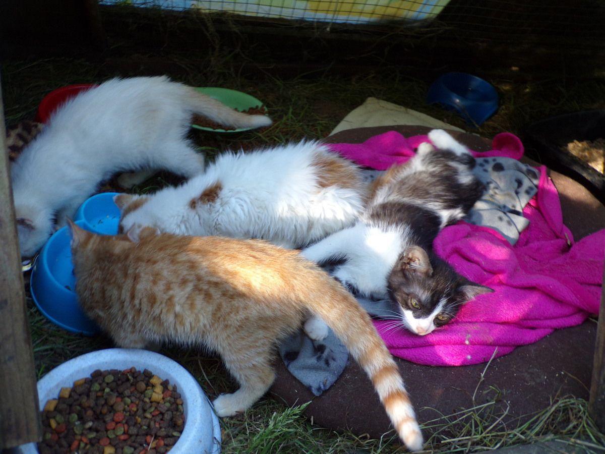 Des chatons abandonnés