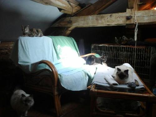 Chats  de la &quot&#x3B;petite maison des chats&quot&#x3B;
