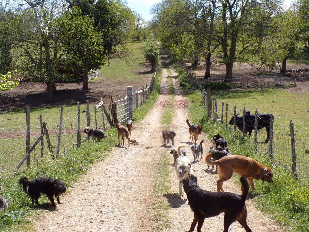 La vie des chiens au refuge