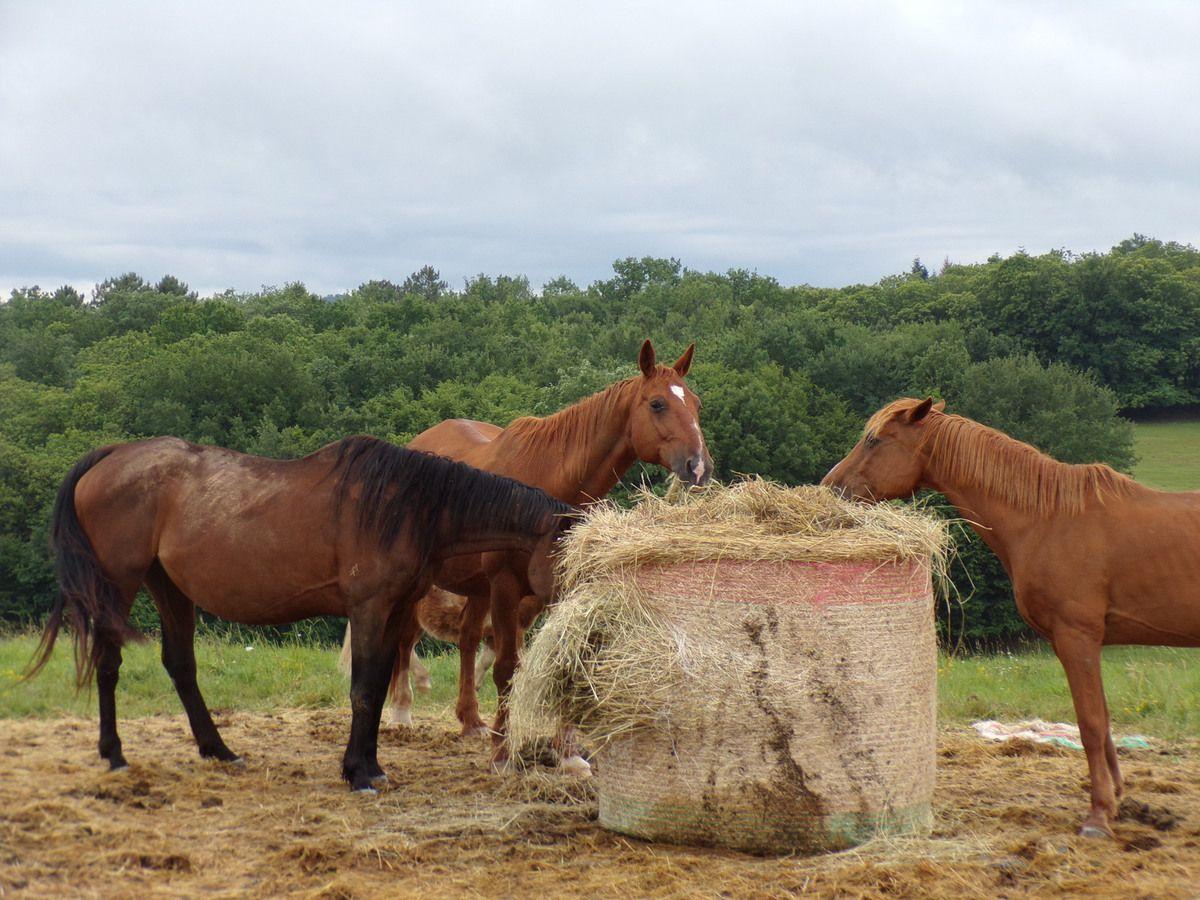 Des nouvelles des chevaux sauvés de l'abattoir en mars