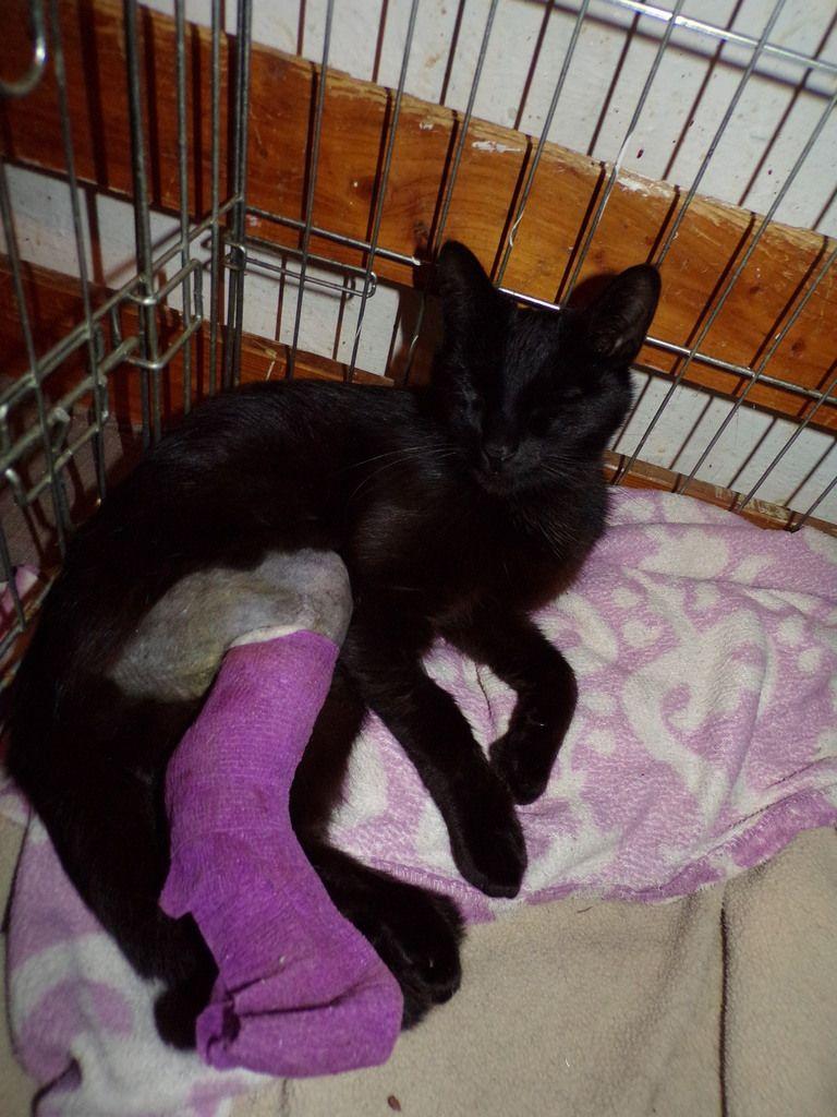 Kilian a été opéré pour sa fracture à la patte