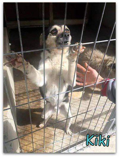 Kiki dans une fourrière de Roumanie