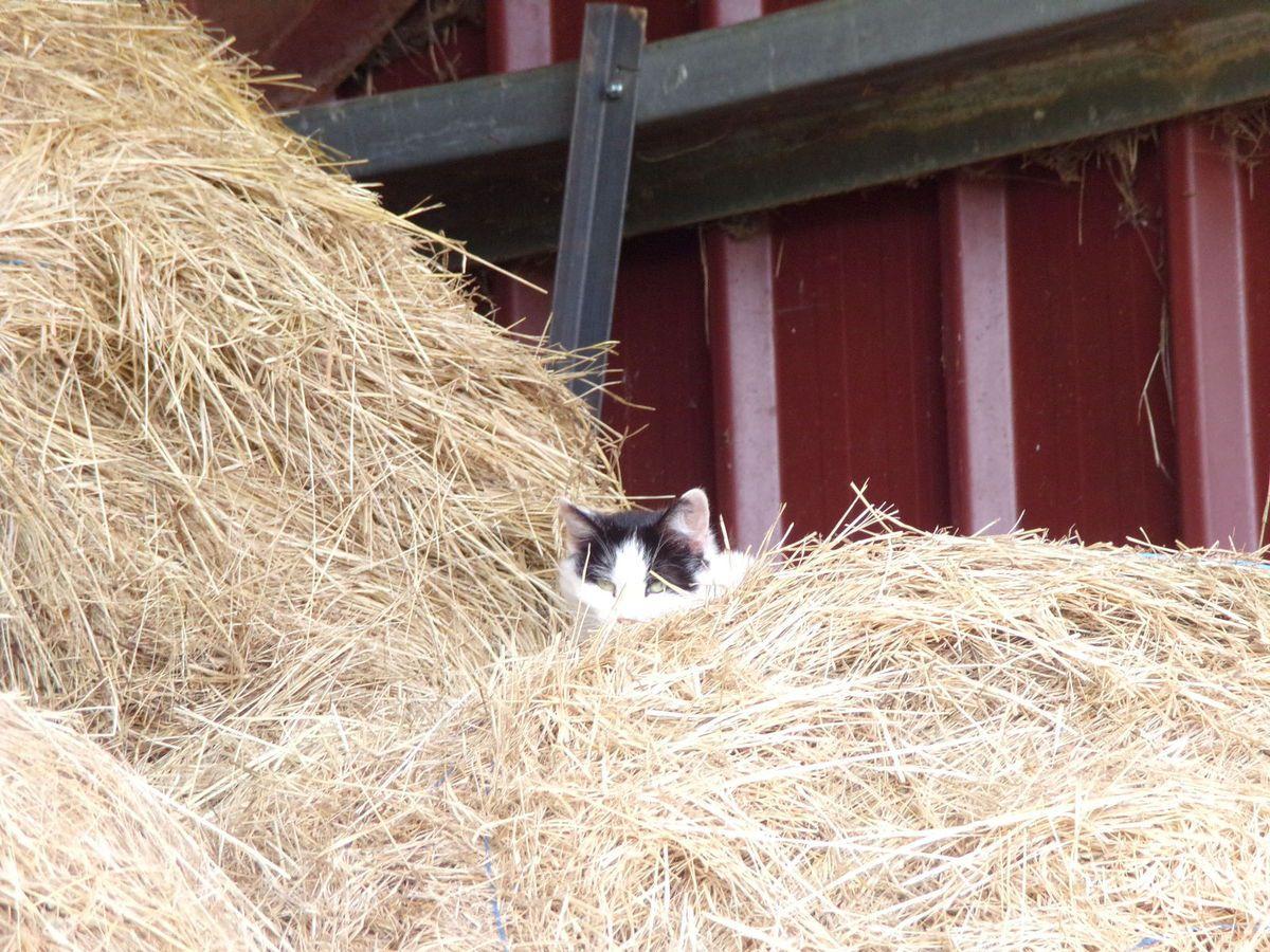 La vie des chats à la Ferme des Rescapés