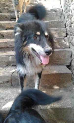 A l'adoption : Johnson, un beau chien rescapé de Roumanie
