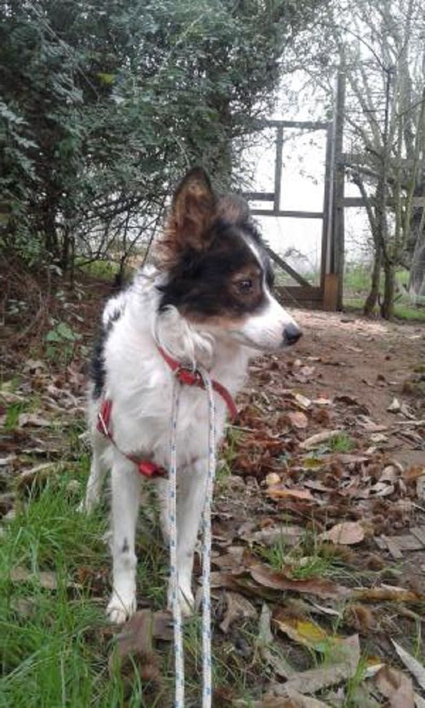 A l'adoption : Duke, un adorable petit chien