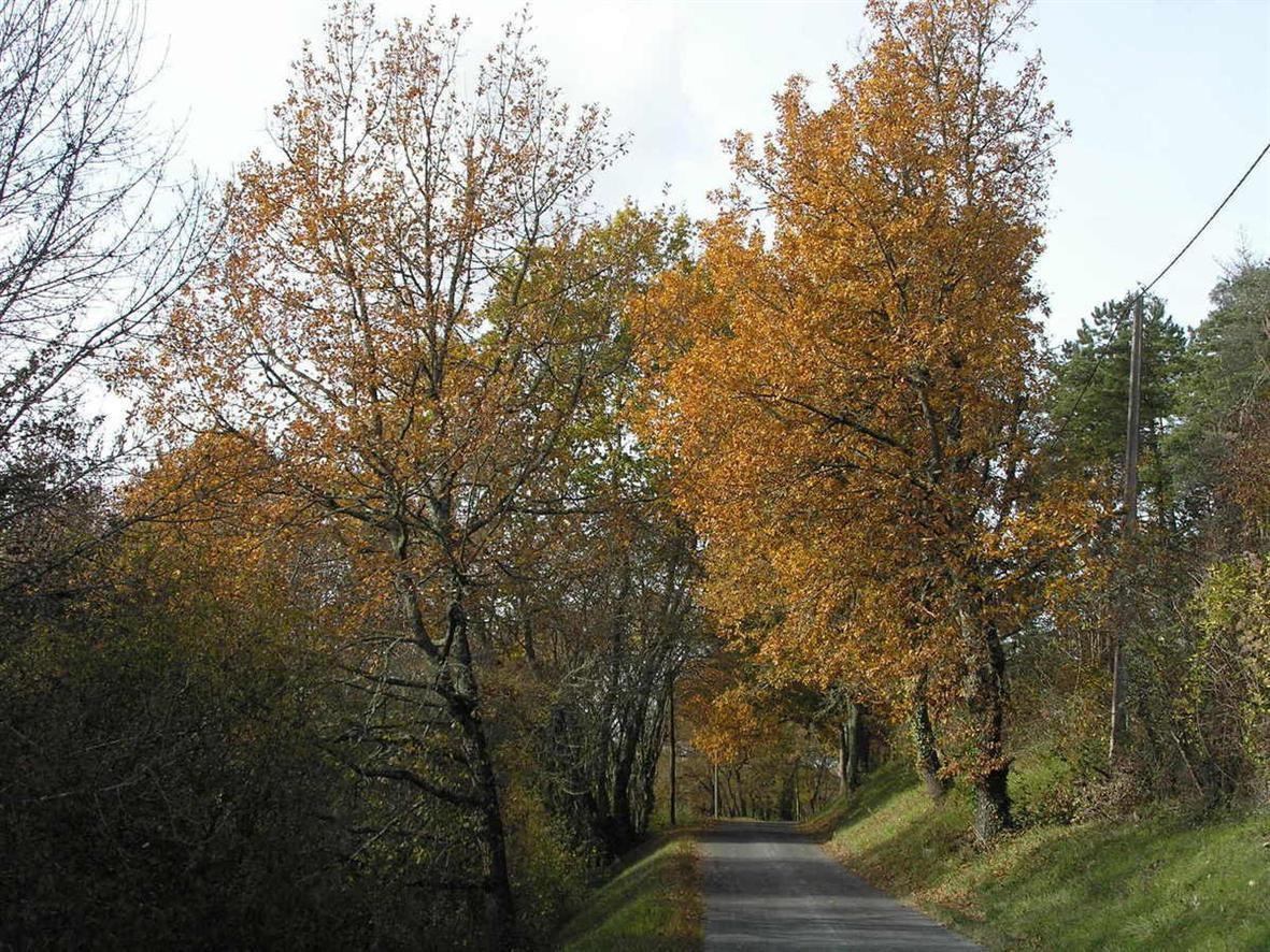 Les 4 saisons en Pays Foyen