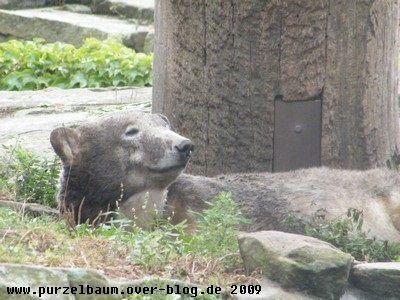 Knut am 21. August 2009