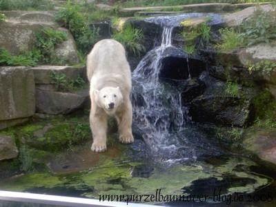 Knut am 30. August 2008