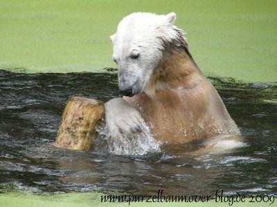Knut am 5. September 2009