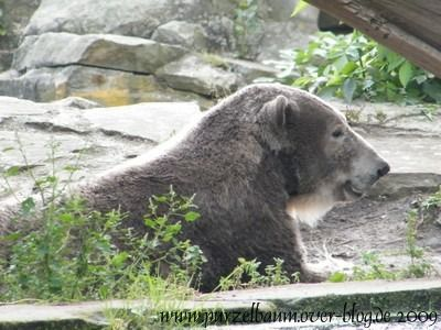 Knut am 11. September 2009