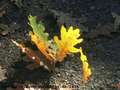 Sonniger Herbstsamstag