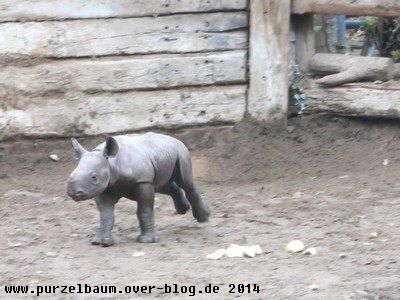 Nashörnchen ohne Horn &#x3B;-)