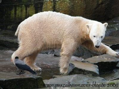 Knut am 27. Dezember 2009
