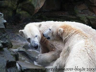 Knut und Gianna am 28. Dezember 2009