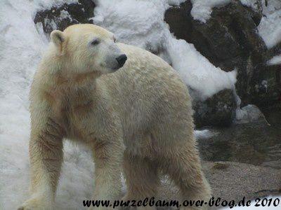 Knut am 30. Dezember 2010