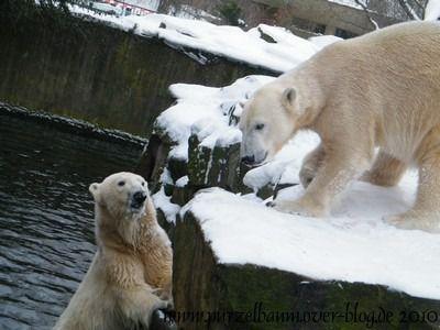 Knut und Gianna am 9. Januar 2010