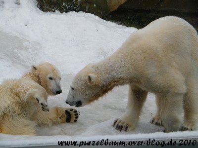 Knut und Gianna am 13. Februar 2010