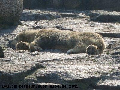 Tosca schlafend in der Frühlingssonne