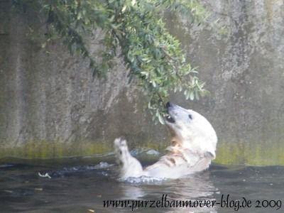 Knut am 1. Mai 2009
